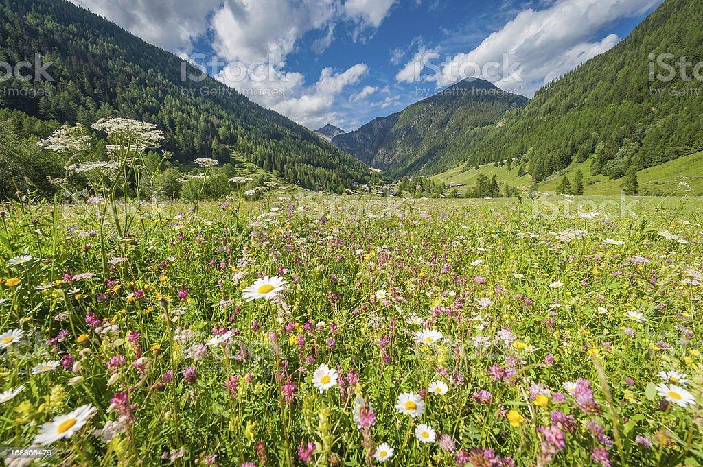 Pretty wildflower meadow idyllic summer Alpine mountain valley stock photo