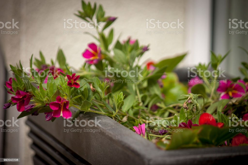 Pretty window box pot, filled with summer flowers stock photo