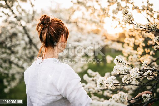 Young Pretty Woman with Dyed Red Hair, Walking in Plum Tree Orchard, Enjoying Blossom in Sunset