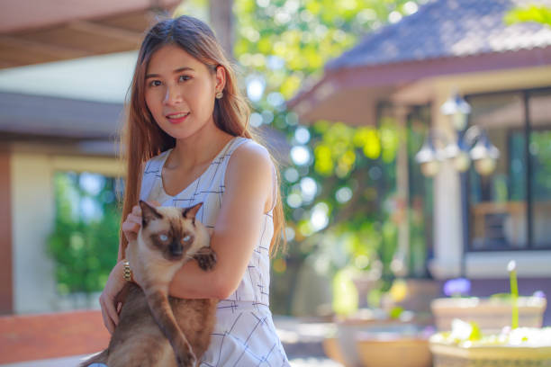 Pretty young Asian woman holding a grey-eyes Siamese cat . stock photo
