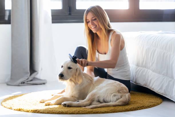 Hübsche junge Frau, die ihrem Hund die Haare putzt, während sie zu Hause auf dem Boden sitzt. – Foto