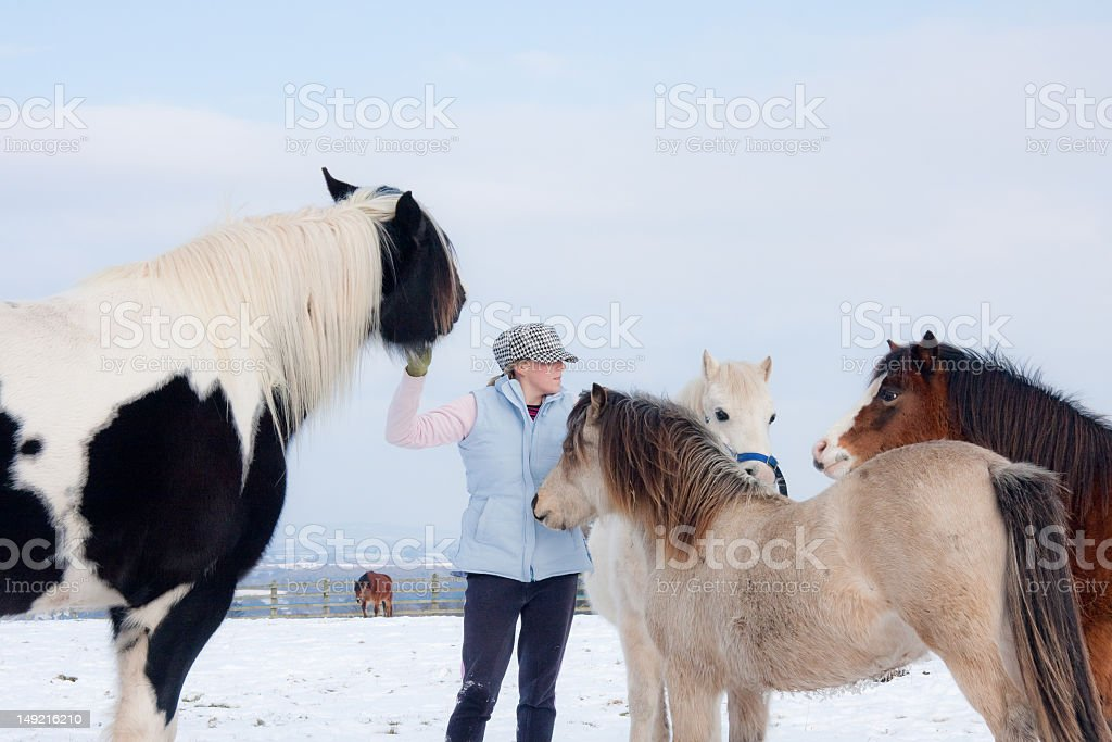 pretty young woman surrounded by horses wanting a stroke. stock photo