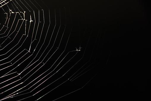 preys on spider web