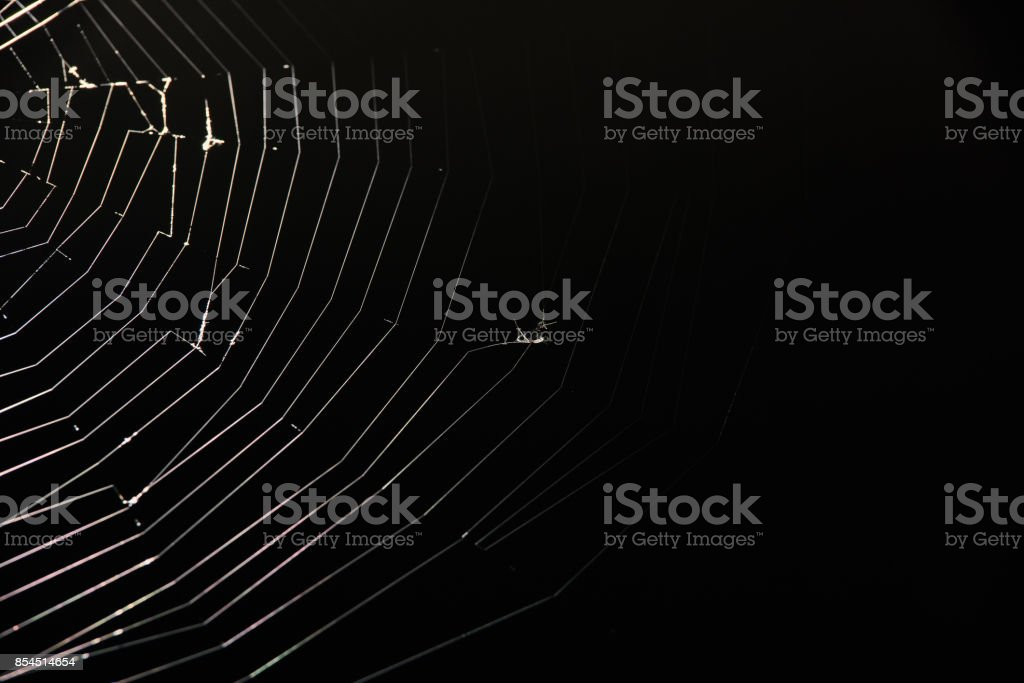 preys on spider web stock photo