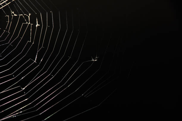 preys on spider web - spider web stock photos and pictures