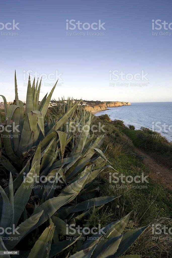 Prickly Aloe royalty-free stock photo