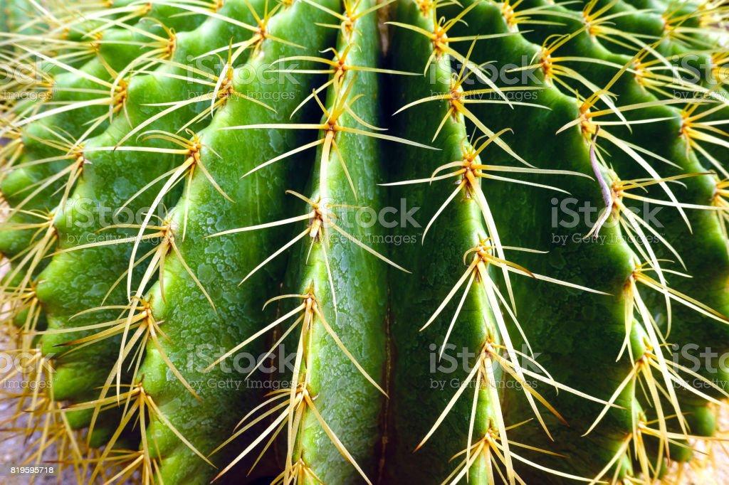 Prickly cactus stock photo