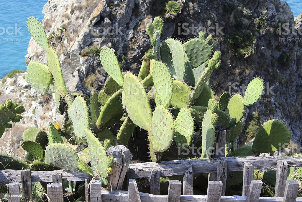 Prickly Pear and Rock royalty-free stock photo