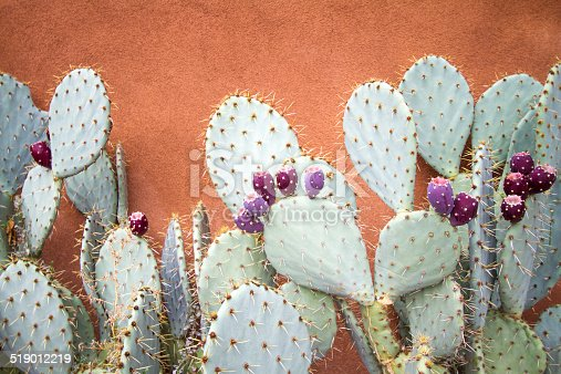 Textured adobe wall and prickly pear cactus, close up. Shot in New Mexico.