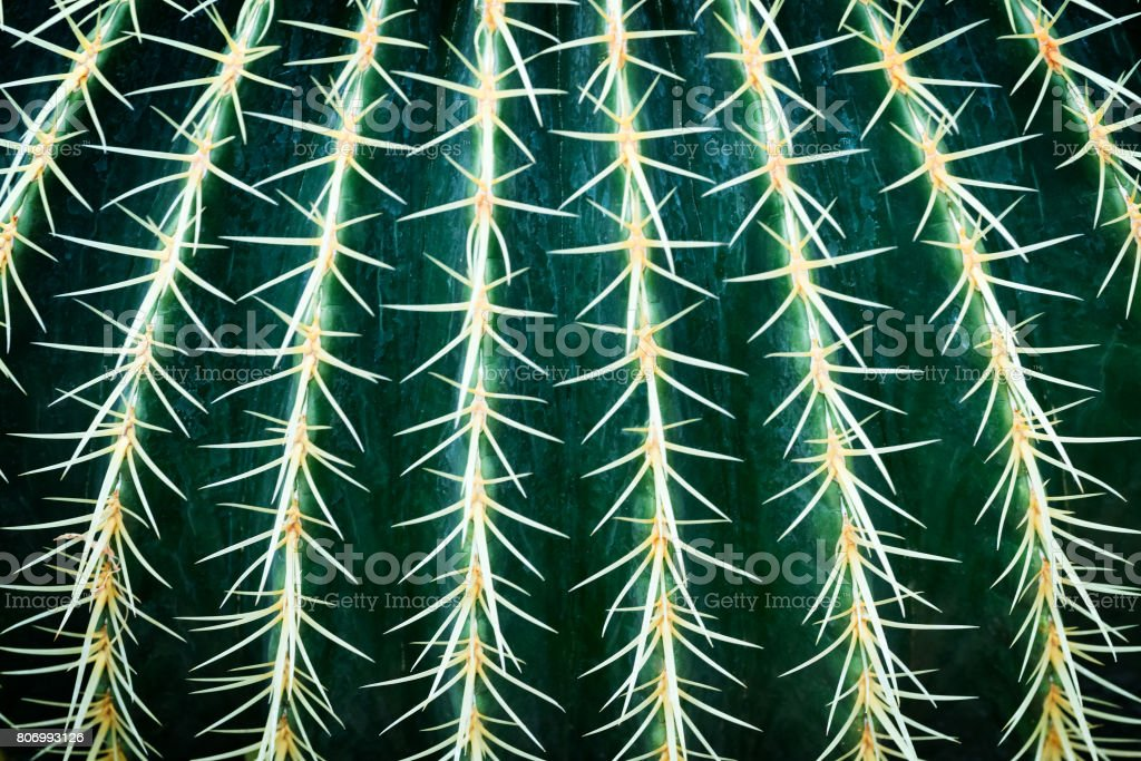Prickly Pear Cactus Close up abstract background stock photo