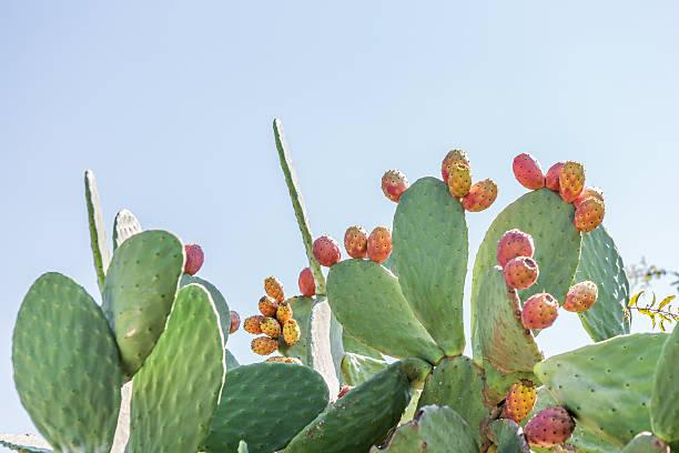 feigenkaktus blatt mit obst - kaktusfrucht stock-fotos und bilder