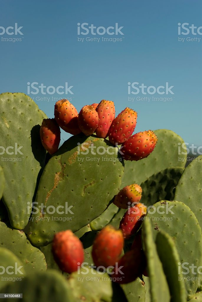 Prickly Pear Cactus with Red Fruit royalty-free stock photo