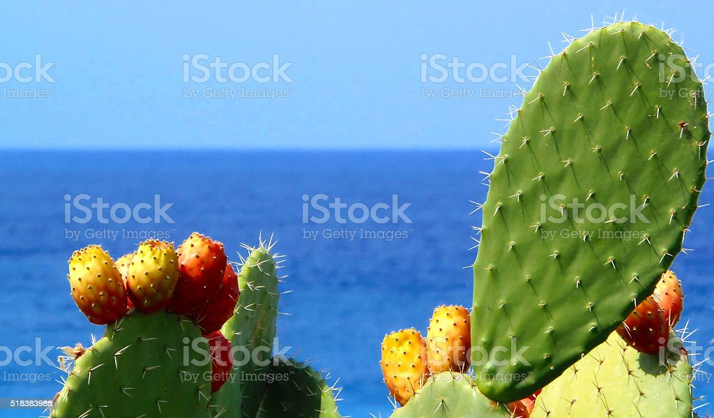 Prickly pears (Indian fig opuntia) by the Mediterranean Sea stock photo