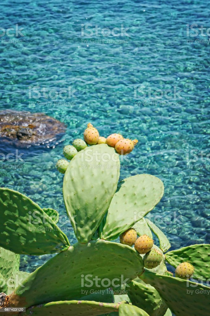 Prickly pears on blue Mediterranean sea stock photo