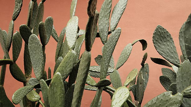 Prickly pears on colorful wall stock photo