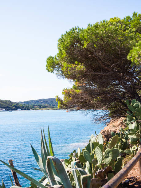 Prickly pears overlooking the sea - foto stock