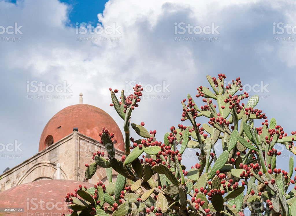 Prickly pears plant and a red dome in Palermo stock photo