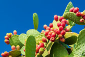 Prickly pears with red fruits and blue sky in background