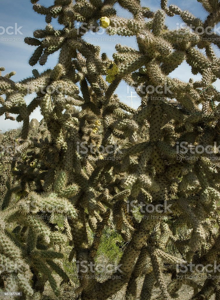 Prickly Philosophy Cactus, Arizona royalty-free stock photo