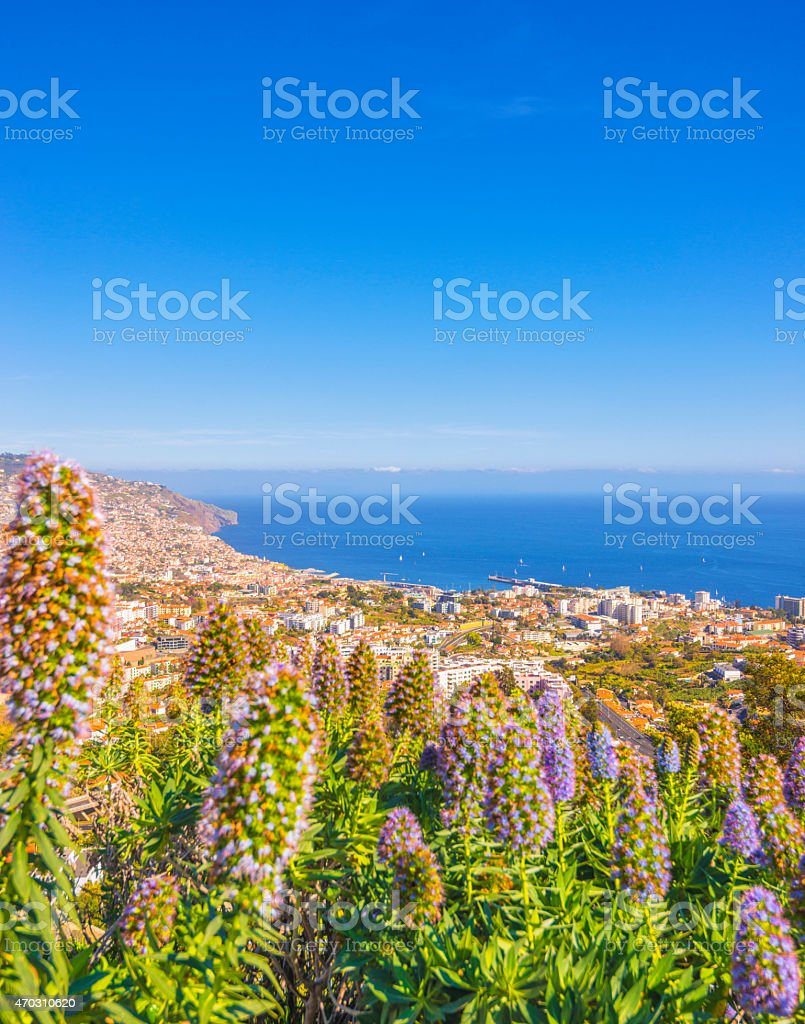 Pride of Madeira flowers and elevated view on Funchal stock photo