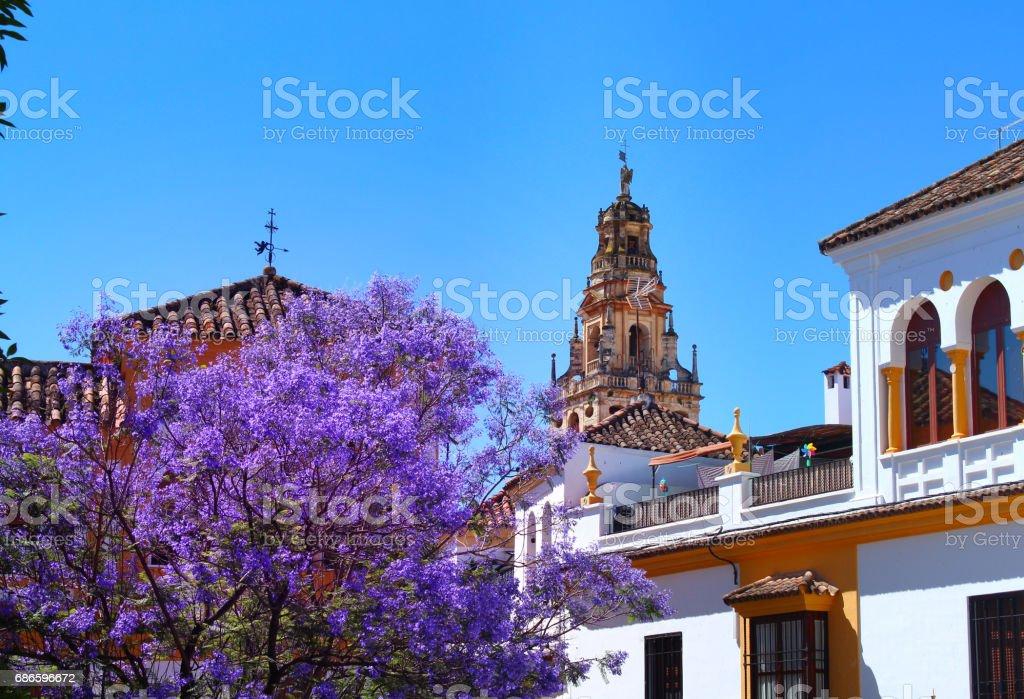 Primavera en Andalusia royalty-free stock photo