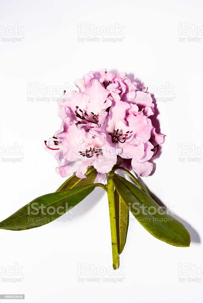 Primavera royalty-free stock photo
