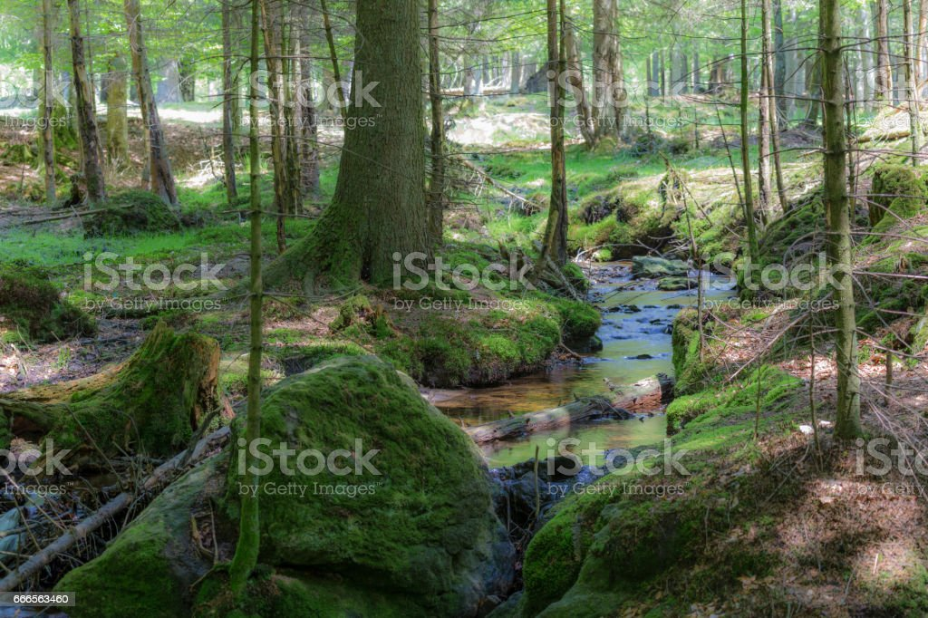 primeval forest in bavarian forest national park stock photo