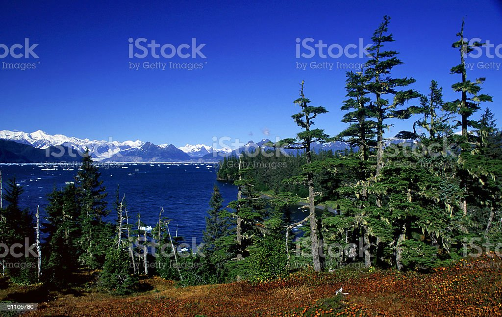Primeval forest royalty-free stock photo