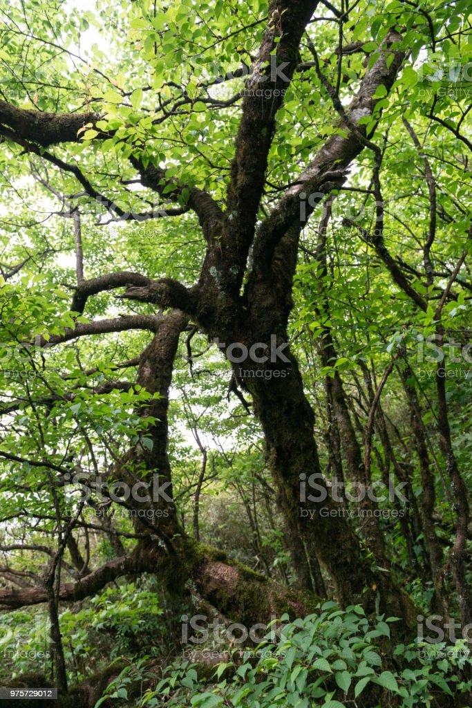 Urwaldgewächse Regenwald - Lizenzfrei China Stock-Foto