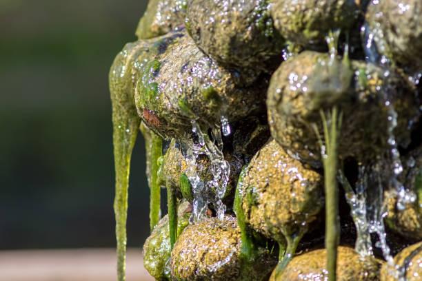ursuppe. rutschige grüne algen bedeckten garten wasserfall. wasser und schlamm von felsen laufen. - schnelle suppen stock-fotos und bilder