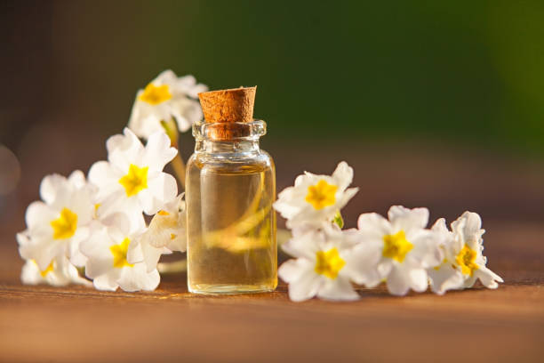 primrose essential oil in  beautiful bottle on table primrose essential oil in a beautiful bottle on the table primula stock pictures, royalty-free photos & images