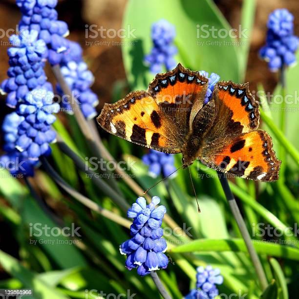 Primroses and butterfly picture id139868966?b=1&k=6&m=139868966&s=612x612&h=fk 9svyqdn5kdxx3hbon3 5sgdcqz46juovpzvp6bxm=