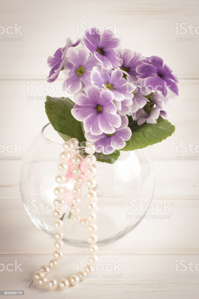Primroses in vase and woman's pearl necklace stock photo