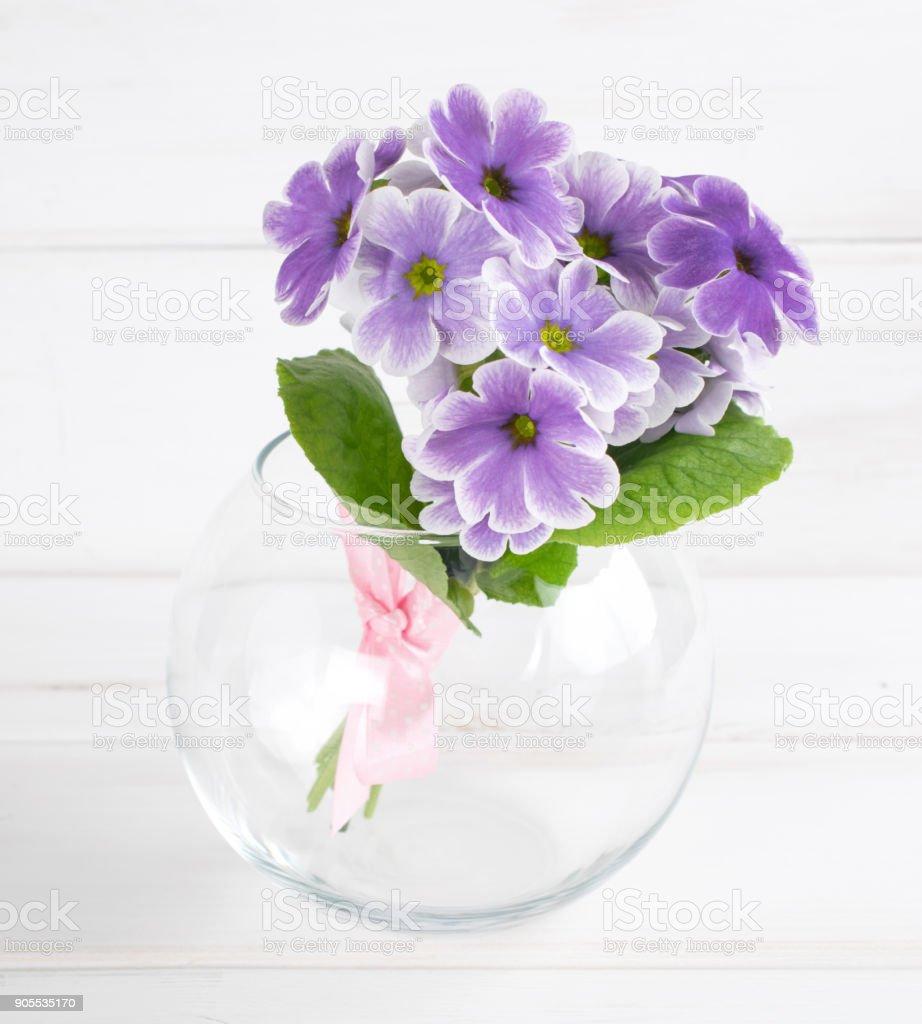 Primroses in vase stock photo