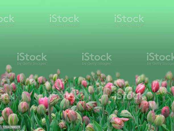 Pring border or background element or component for design picture id1204299323?b=1&k=6&m=1204299323&s=612x612&h=rnk2oplja7e2uy2cxq81eandh2brgbvy qh  jqd z8=