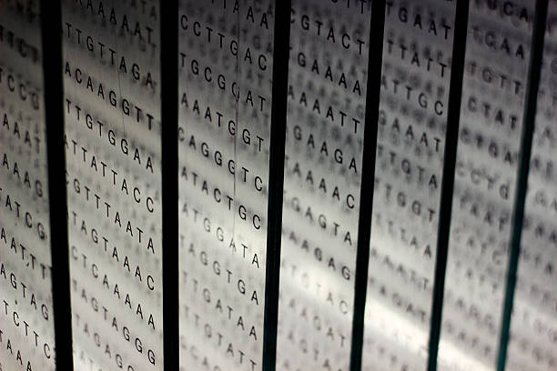 printout of DNA nucleotide sequence on glass printout of DNA nucleotide sequence on glass nucleotide stock pictures, royalty-free photos & images