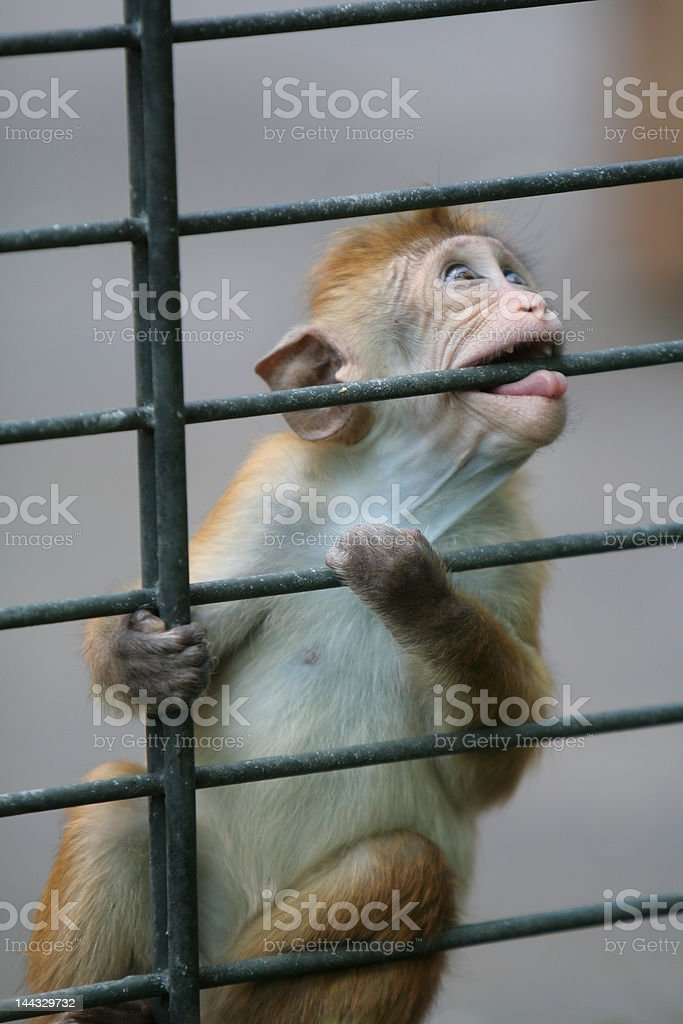 Prisioner royalty-free stock photo