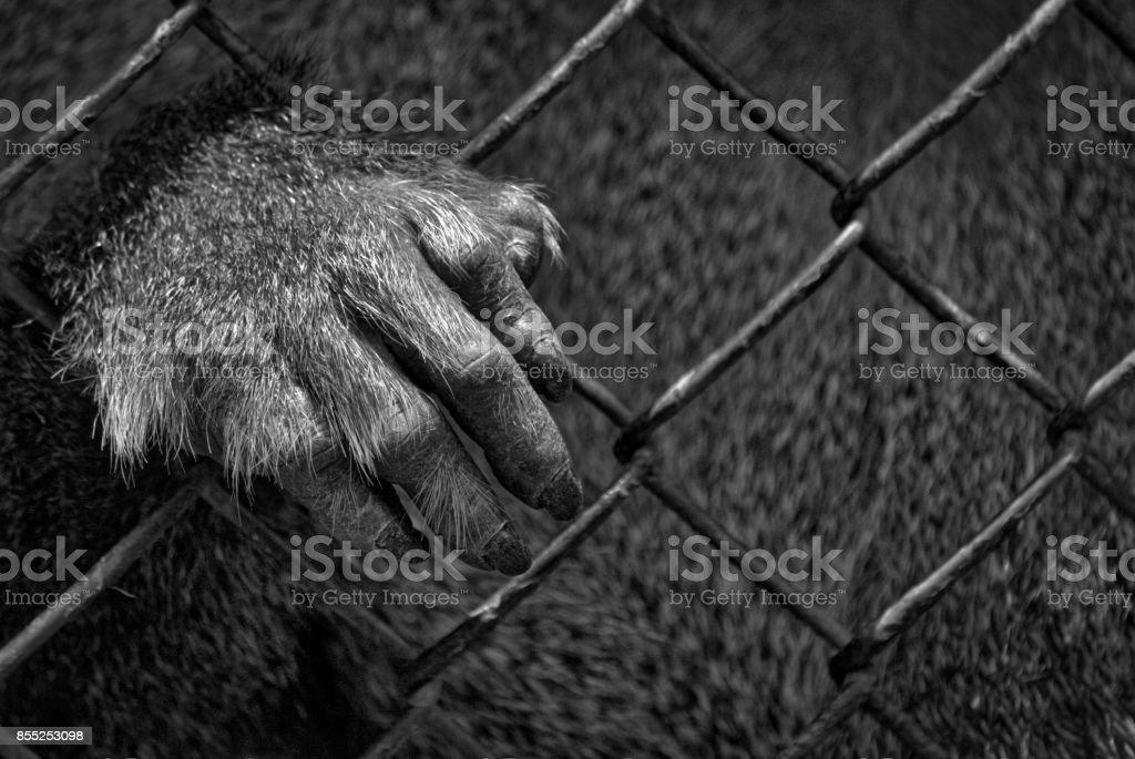 Prisoner 2 stock photo