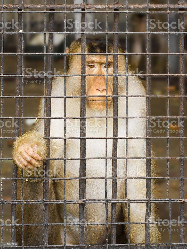Prisoner  Animals In Captivity Stock Photo