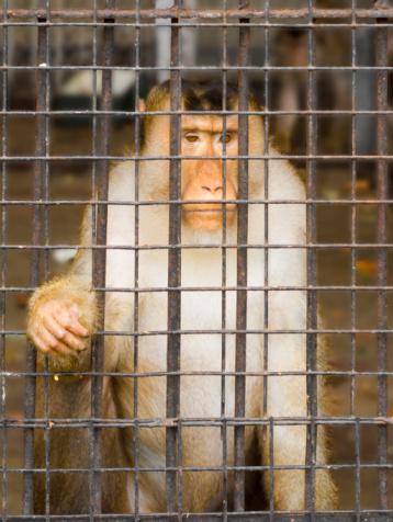 Prisoner Stock Photo - Download Image Now