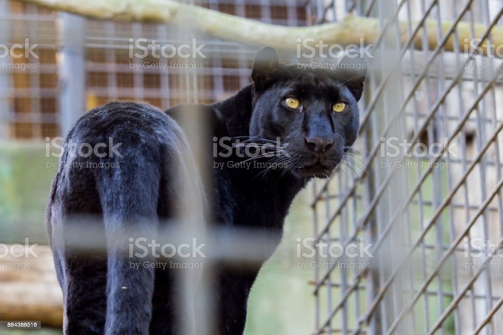 Prisoners stock photo