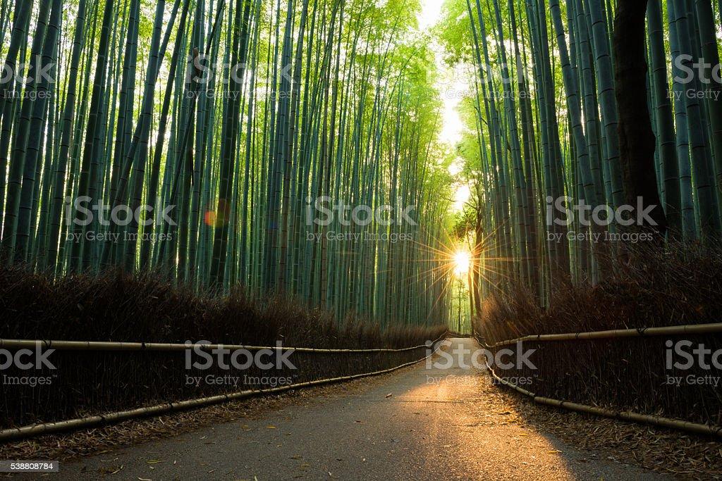 Bella foresta di bambù all