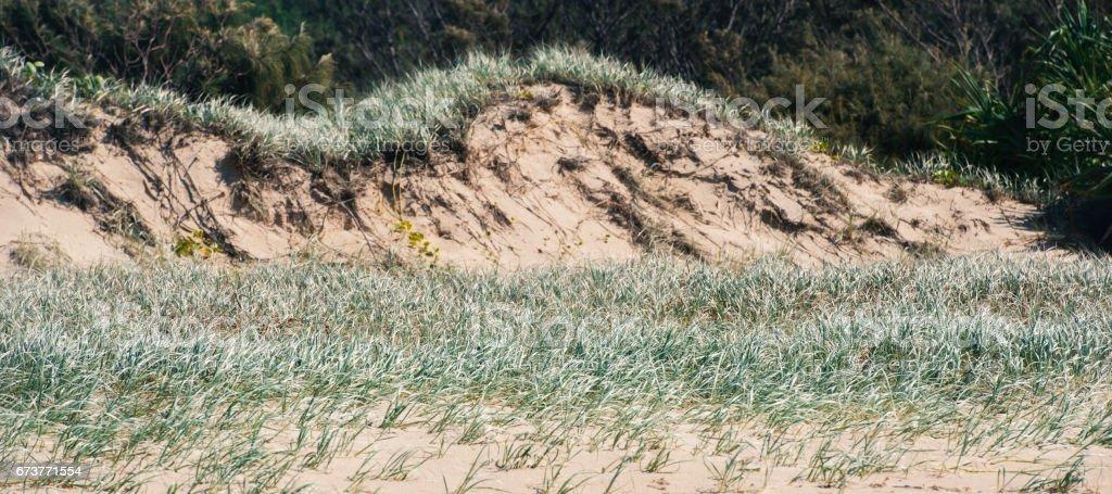 Pristine beach on Moreton Island. photo libre de droits