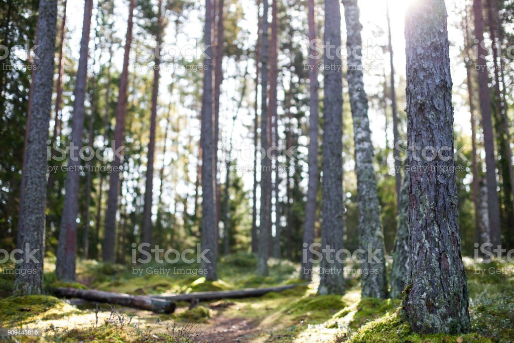 Unberührte Wald – Foto
