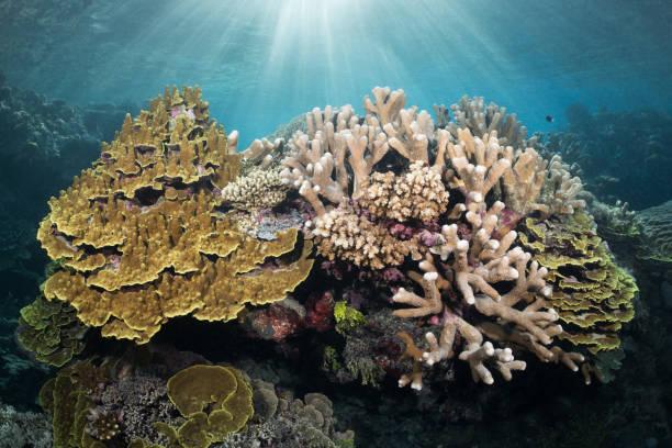 pristine hard coral garden - organizm wodny zdjęcia i obrazy z banku zdjęć