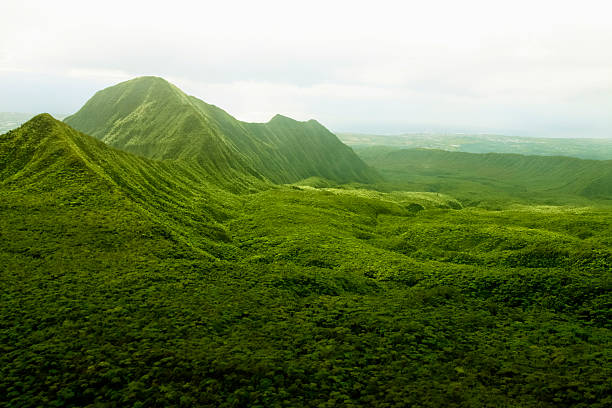 pristine rainforest,reunion island, east africa, indian ocean. - reunion stock photos and pictures