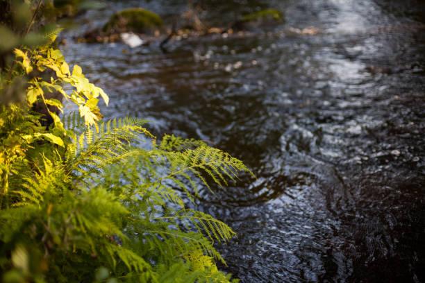 Unberührte Fluss – Foto