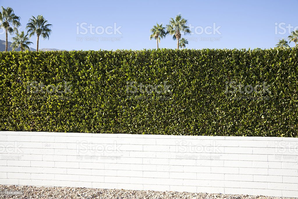 Privacy Hedge And Wall stock photo