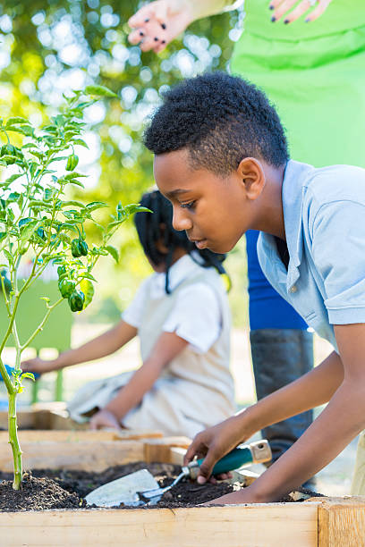 Private elementary school students gardening during science class stock photo