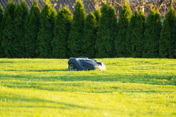 Private Home Garden Automatic Robot Mower Mowing Grass stock photo
